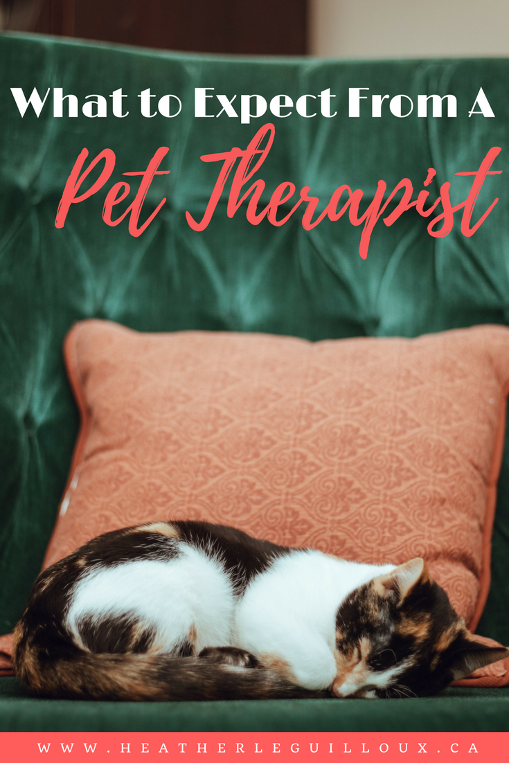 Although not yet approved for professional certification in North America, Pet Therapists have the right to practice and offer support to a range of different clientele. #pet #therapist #aprilfools